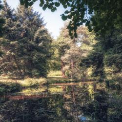 In een magisch bos