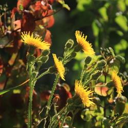 Bloemen in het zonnetje