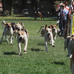 Jacht met honden