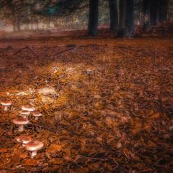 Herfst in het Plankenwambuis
