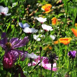 Zomerse bloemetjes