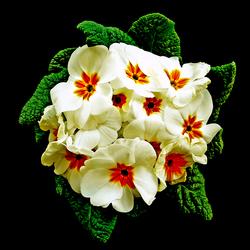 Kropje bloemen