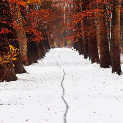 Herfst tintje in de winter