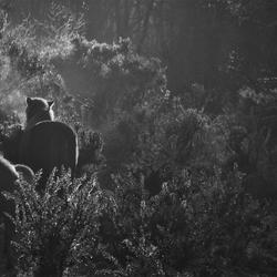 paarden herikhuizerveld