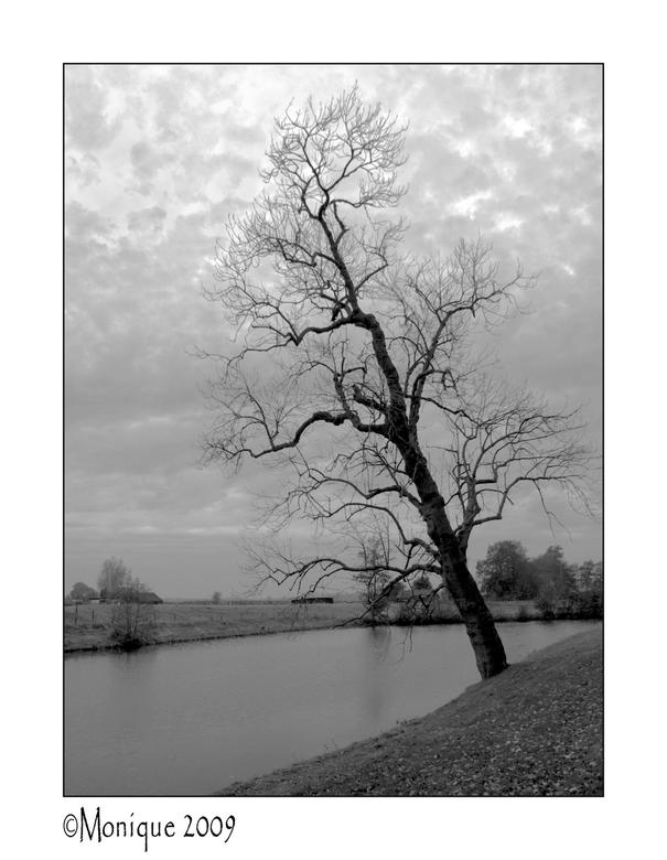Bewerking: de boom van Pisa - Ik heb geprobeerd het donkere een beetje uit de foto te halen. Ben benieuwd wat jullie ervan vinden...