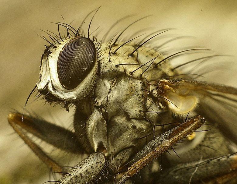 vlieg, dooie - dooie vlieg, bleef lekker rustig zitten...