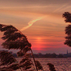 sunrise trough reed