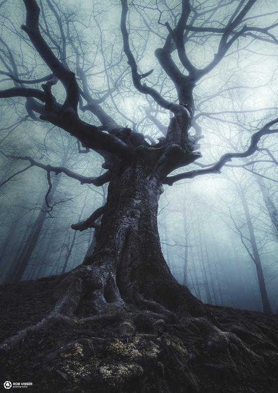 Heksenboom - Heksenboom, Bladel