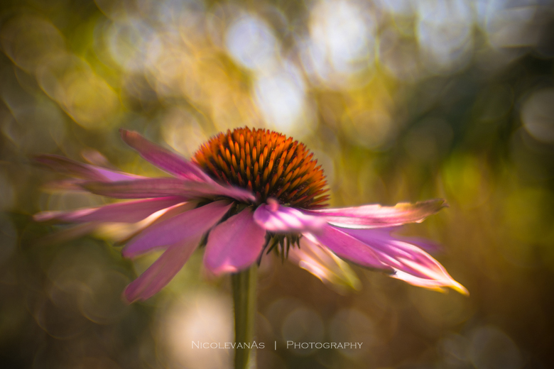Flower power. - De lensbaby Sweet 35, een fantastische lens om met creatieve fotografie bezig te zijn.<br /> De bokeh onstond door de lichtval tussen