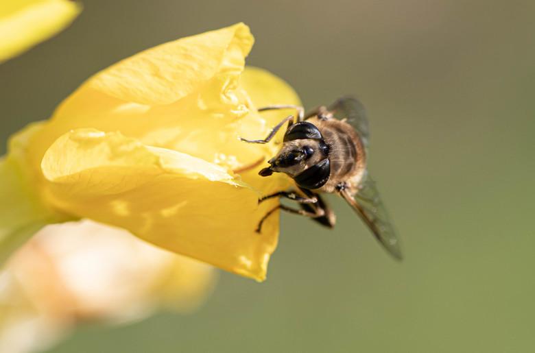 Zomaar een vlieg -