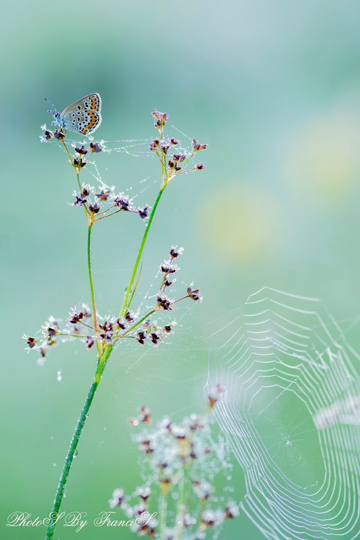 Alles moest erop. - Het spinnenweb in de dauw wilde ik ook graag in de foto. Net zoals de vlinder met teek op het oog. De spin moest ik wel even zoeke