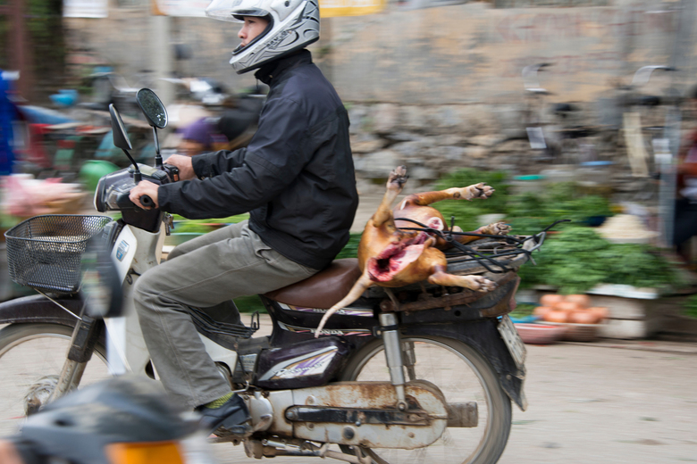 DSC_8164 - Even naar de markt achter een hondje voor op de barbecue...