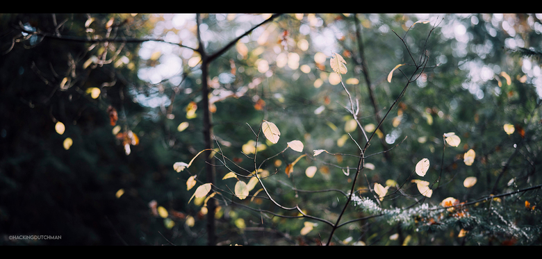 Blaadjes - Blaadjes in het bos, in de herfst, aan een boom.<br /> <br /> <br /> <br /> ©MotionMan 2020