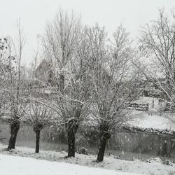 winter in Maassluis