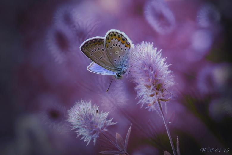Tenderness - Ik heb de kleuren in deze foto aangepast met een plug-in filter.