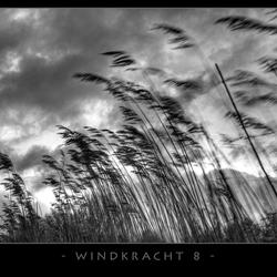 windkracht 8