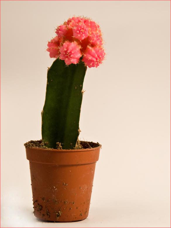 Pink Ribbon - Nog een bijdrage....voor iedereen die met deze afschuwelijke ziekte te maken heeft....<br /> Dat we maar met z&#039;n allen onze stekel