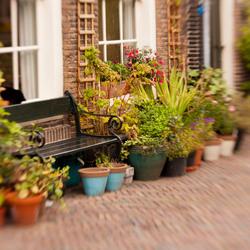 Planten in Dordrecht