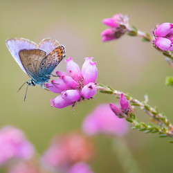 Dreaming of a blue butterfly....
