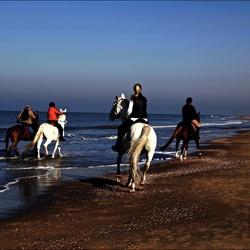 Horses on the beach ...
