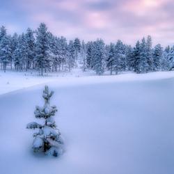 Wachten op kerst........