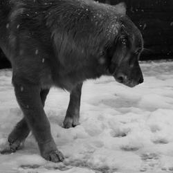 Finn's First Snow