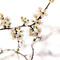 Lente 2