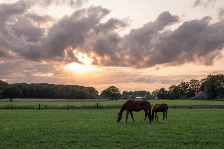 Paarden en wolken - Een alledaags plaatje tijdens het gouden uurtje