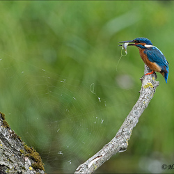 Achter het net vissen