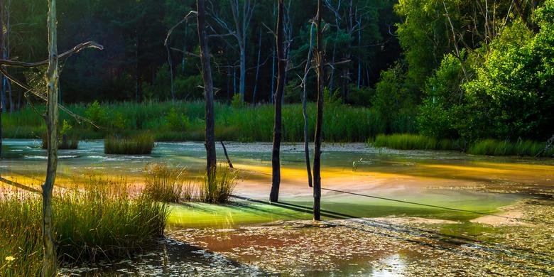 KBH avondlicht - Afgelopen zomer waren we een week in natuurgebied de Königsbrücker Heide (in Duitsland). Door de laagstaande zon ontstond dit kleuren