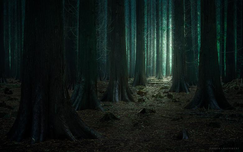 Donkere fantasieën - Dit bijzondere stukje Speulderbos prikkelt mijn fantasie nogal eens...<br /> <br /> Exif: ISO 100, F9, 3.2s, 81mm