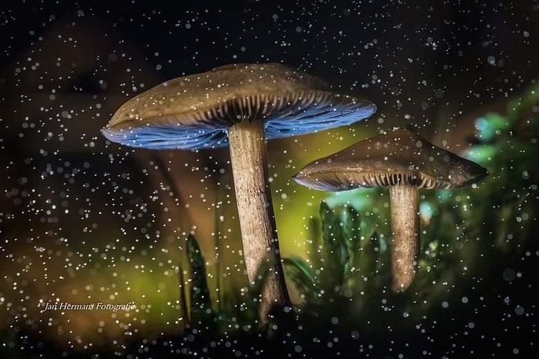Strobist Mushroom -
