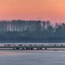 IJskoud langs de IJssel