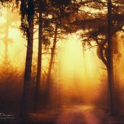 Morning fog dissolves