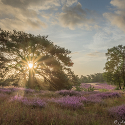 Brunssummerheide tijdens de zonsookomst