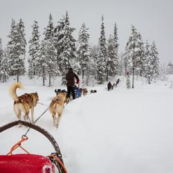 winters landschap uit de slee