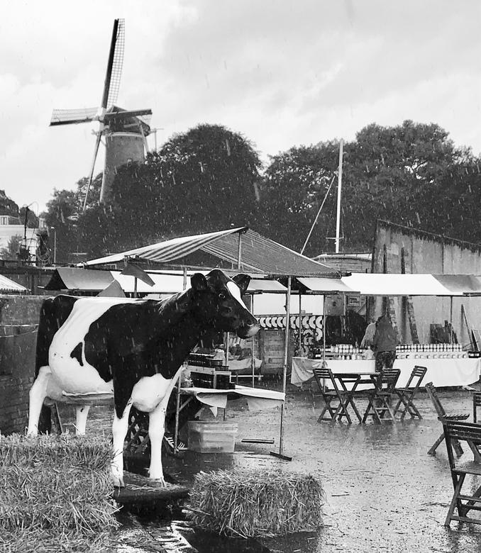 Regen, wind, koe en een molen - Nederland in het vierkant