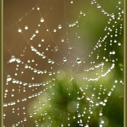 Spinnenweb met druppels