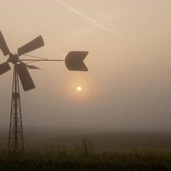 Bosmanmolentje in de mist