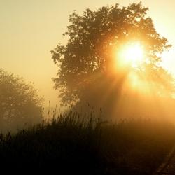 Opkomende zon in de ochtenddauw