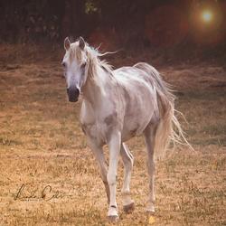 HORSES (1 van 1)-6