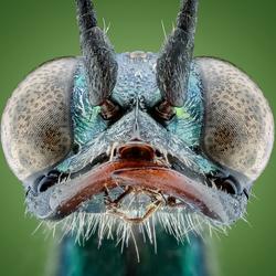 KakkerlakkenDoder..