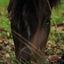 Paard bij de Gaas