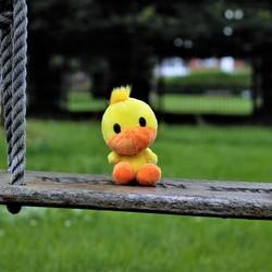 Duck on swing