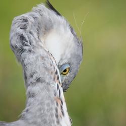 Heron(ymous)3