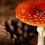Herfst - paddenstoel