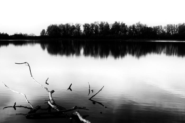 de tijd zal ons inhalen - Een dode boom in het water. Op de achtergrond een rij bomen aan de oever.