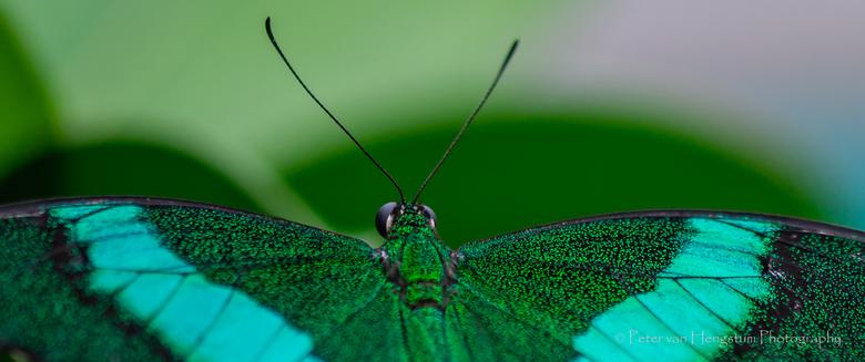 Schoonheid van de natuur -