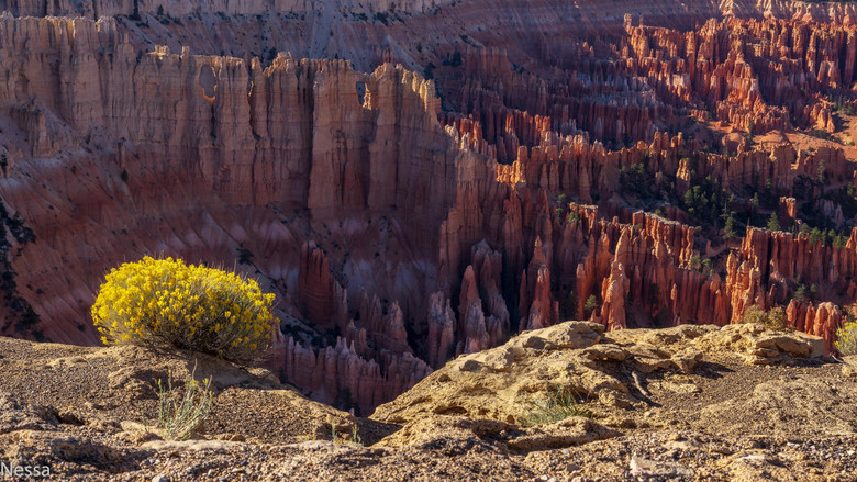 Bryce Canyon USA -
