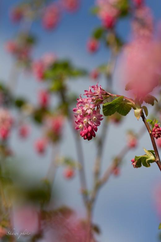 bloem - bloem